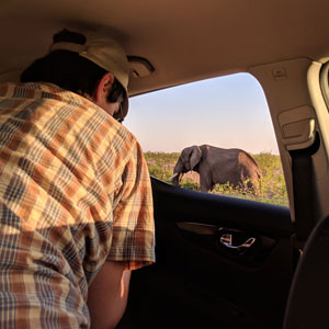 How to choose a safari