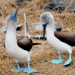Things to see & do in the Galapagos Islands