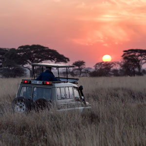 Where to go on a budget safari  Budget safari highlights and best