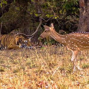 Bandhavgarh travel guide