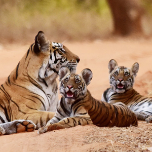 Best time to visit Bandhavgarh National Park