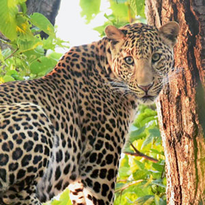 Wildlife in Bandhavgarh