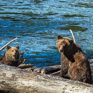 Canada wildlife holidays guide