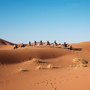 Things to do in the Sahara