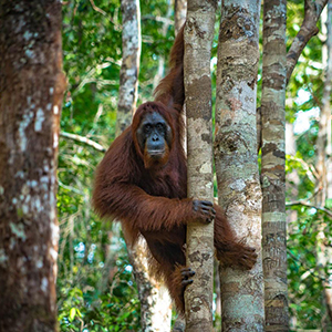 Wildlife in Kalimantan
