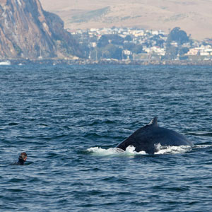 Whale watching responsible tourism
