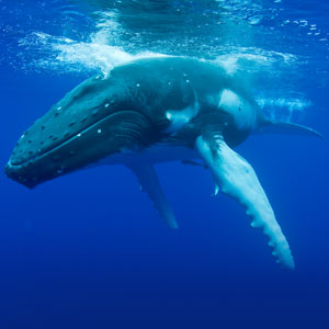 Whale watching travel guide