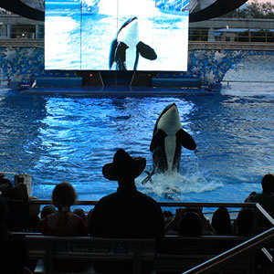 Why we think keeping whales in captivity is wrong