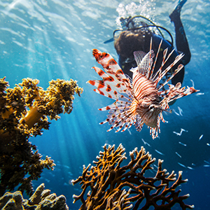 Lionfish spearing holidays in Belize