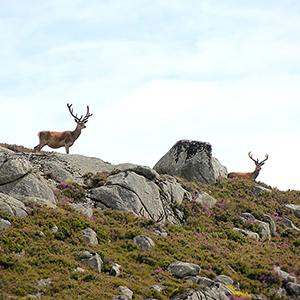 Scotland wildlife travel guide
