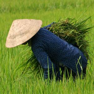 Image result for vietnam travel