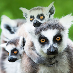 Madagascar holidays travel guide