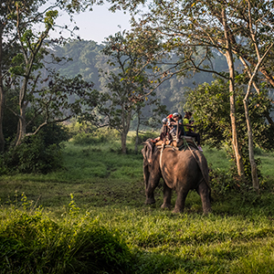 Elephants back safaris & conservation