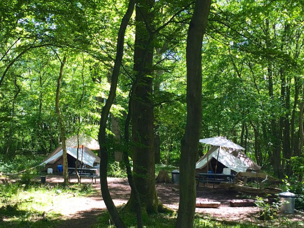 High Weald eco forest camping, England