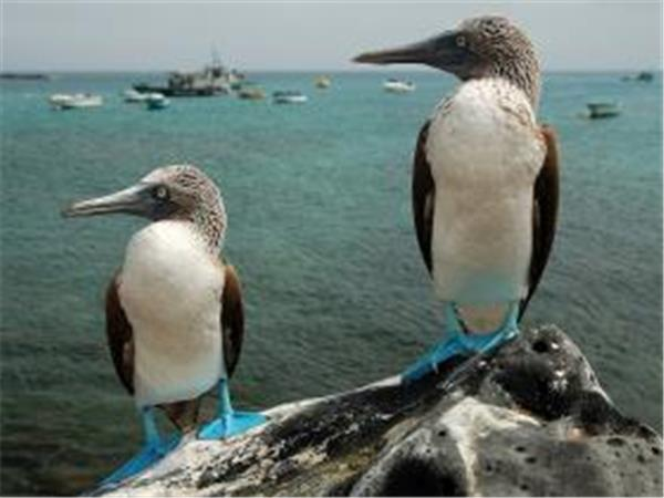 Galapagos Islands cruise, all ages