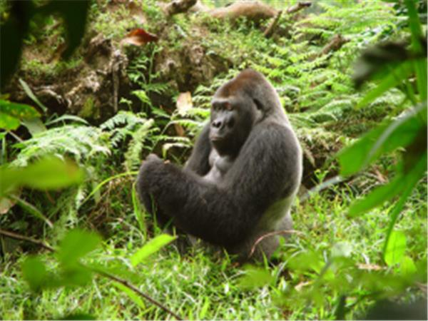 Wildlife and primates tour in central Africa