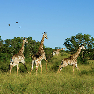 Family holidays in South Africa guide