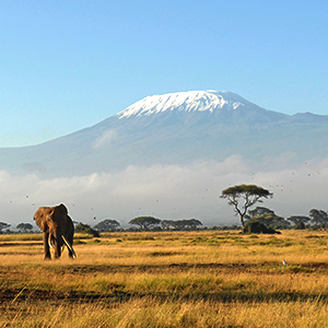 Trekking up Mount Kilimanjaro