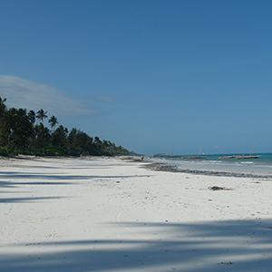 Tanzania safari & beach holidays