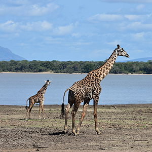 Things to see & do in Selous Game Reserve