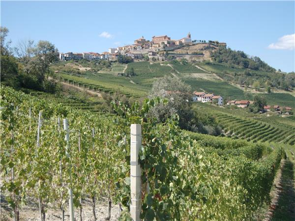 Piedmont walking holiday, Vineyards of Barolo