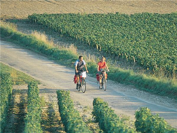 Burgundy cycling holiday, France