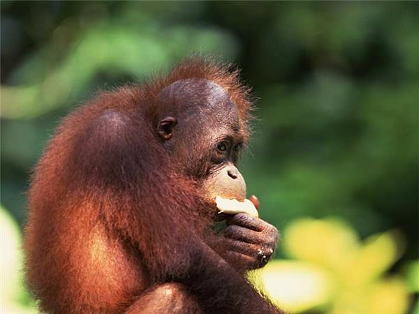 Borneo wildlife holiday