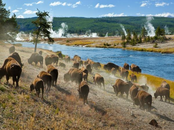 Camping tour of Yellowstone, USA