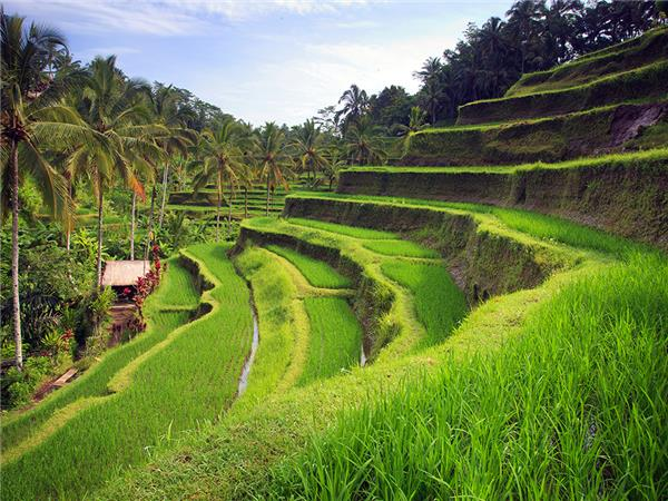 Bali cycling holiday in Indonesia