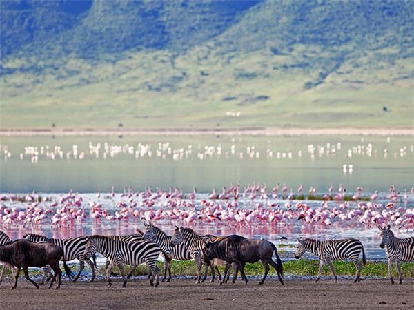 Kenya & Tanzania wildlife tour, Masai to Serengeti