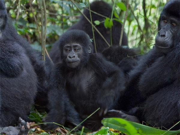Rwanda, Kenya & Uganda wildlife holiday, on a shoestring