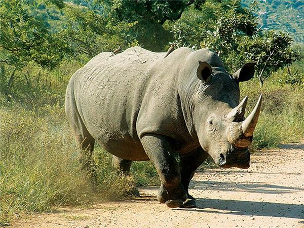 South Africa and Swaziland safari holiday