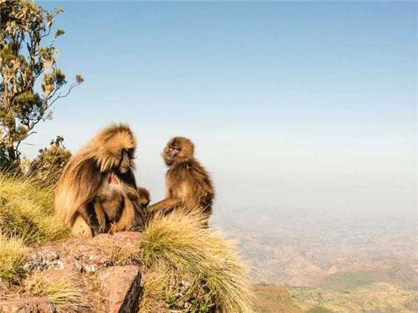 Trekking holiday in the Simien Mountains, Ethiopia