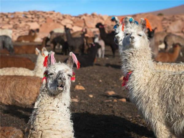 Bolivia, Chile and Argentina overland truck tour