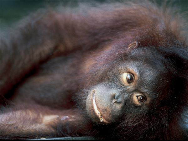 Borneo and Malaysia holiday, trekking orangutans and rainforest