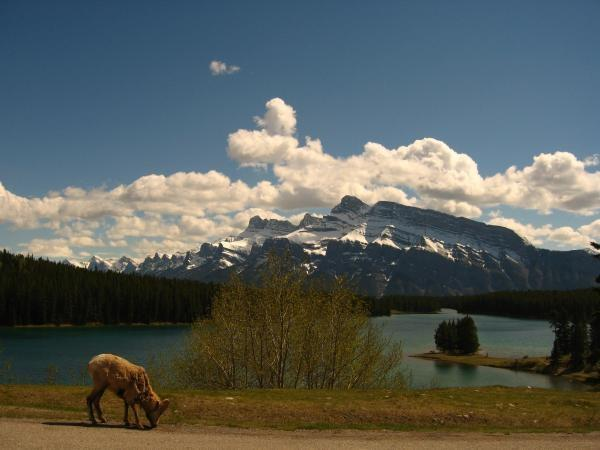 Canada national parks family holiday