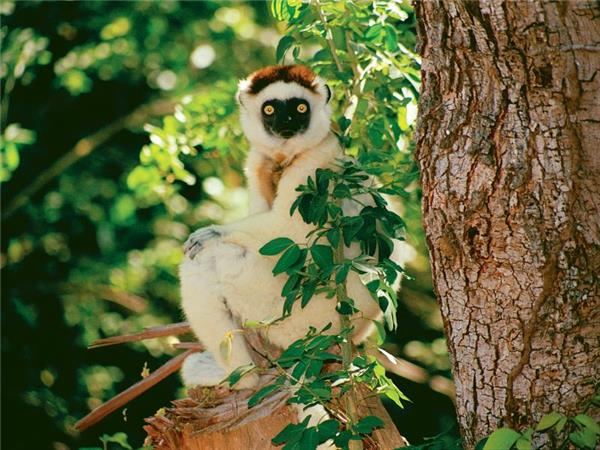 Madagascar holidays, The lost continent