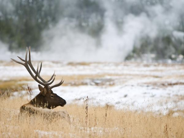 Yellowstone NP winter wildlife tour, USA