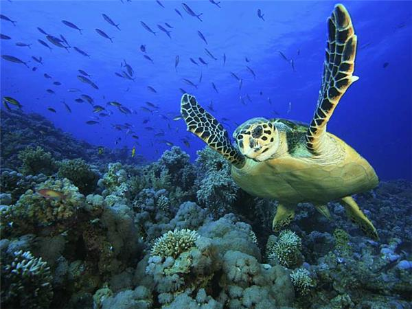 Maldives holidays, wildlife cruise
