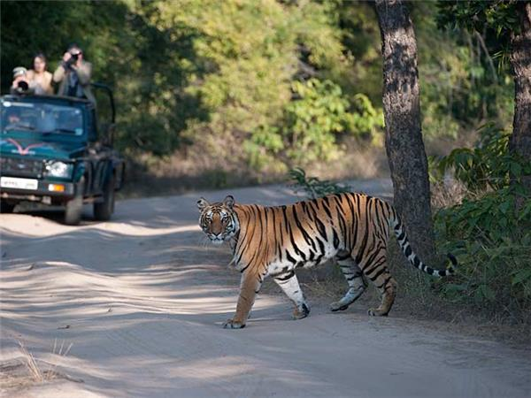 Tiger and wildlife safari, India