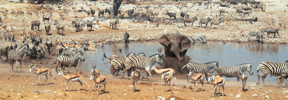 Watering hole in Namibia