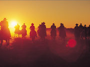Drovers Horses, South Australia. Photo by South Australia Tourist Board