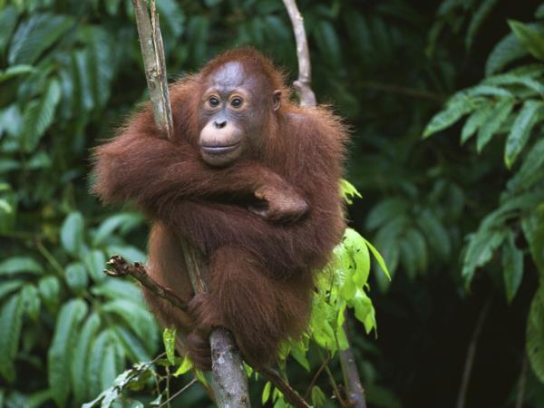 Borneo wildlife holidays