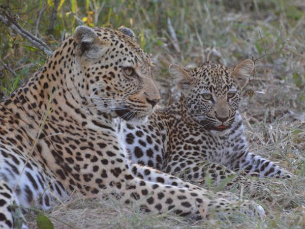 Ten day wildlife safari, South Africa