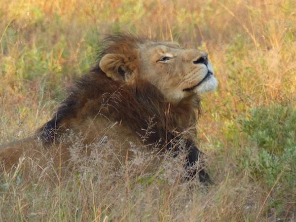 7 day luxury Kruger safari holiday
