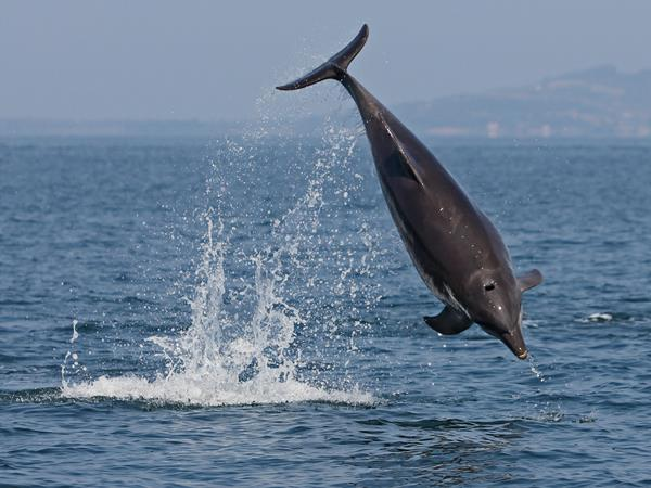 Dolphin conservation in Greece