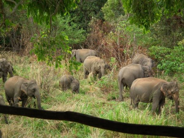 Elephant conservation in Sri Lanka