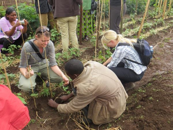 Mountain gorilla project in Uganda