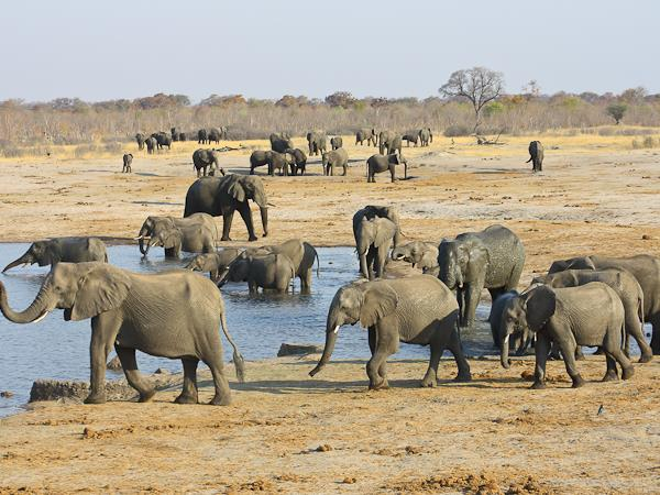 Botswana and Zimbabwe Ivory Route lodge tour