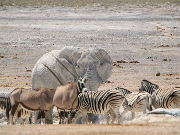 Namibia Desert & Caprivi small group camping safari